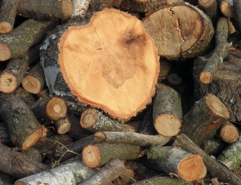 """Zweierlei Maß in Löhne beim Baumfrevel: Baumschutz und Kettensäge – die """"Tabula-Rasa-Affäre"""" als Gipfel der grünen Umwelt-Heuchelei"""